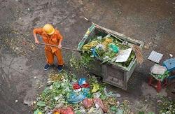 W4 forestry waste collecton Ravenscourt Park